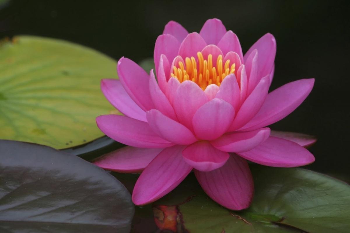 Karma y Dharma - El Karma Yoga (Clase 2)