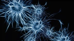 neuronas-estrellas-portada
